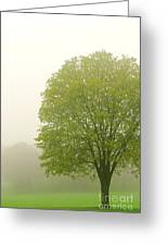 Tree In Fog Greeting Card by Elena Elisseeva