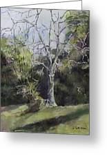 Tree Greeting Card by Janet Felts