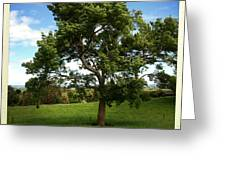 Tree Greeting Card by Les Cunliffe