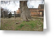 Tree Near The Gaol Greeting Card by Ezra Hoek