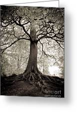 Tree Of Life Greeting Card by Dominique De Leeuw