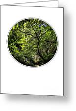 Tree Of Life Greeting Card by Holly Martin