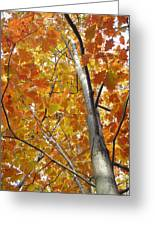 Tree Of Orange Greeting Card by Guy Ricketts