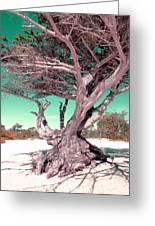 Tree On Beach Greeting Card by Julie Lourenco