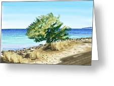Tree On The Beach Greeting Card by Veronica Minozzi