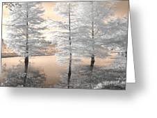 Tree Reflections Greeting Card by Jane Linders