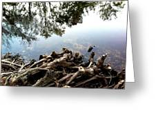 Tree Reflections Greeting Card by Robin Lewis