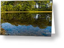 Tree Reflections Greeting Card by Svetlana Sewell