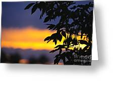 Tree Silhouette Over Sunset Greeting Card by Elena Elisseeva