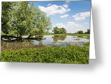 Tree With A Horizontal Tree Trunk Reflected In The Water Greeting Card by Ruud Morijn