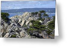 Trees Amidst The Cliffs In California's Point Lobos State Natural Reserve Greeting Card by Bruce Gourley