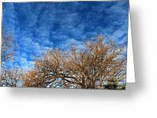 Trees And Clouds Greeting Card by Jay Nodianos