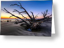 Trees At Driftwood Beach Greeting Card by Debra and Dave Vanderlaan