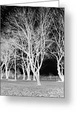 Trees In Park 2 Greeting Card by Chalet Roome-Rigdon