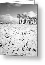 Trees In Snow Scotland IIi Greeting Card by John Farnan