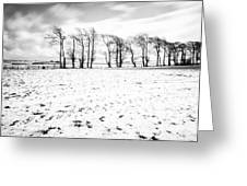 Trees In Snow Scotland Iv Greeting Card by John Farnan