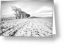 Trees In Snow Scotland V Greeting Card by John Farnan