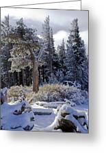 Trees Of Mcleod Greeting Card by Chris Brannen