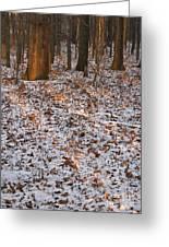 Trees Greeting Card by Steven Ralser