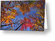 Treetops In Fall Forest Greeting Card by Elena Elisseeva