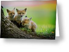 Trio Of Fox Kits Greeting Card by Everet Regal