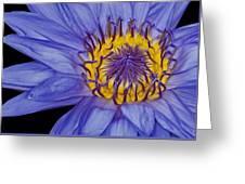 Tropical Day Flowering Waterlily Greeting Card by Susan Candelario
