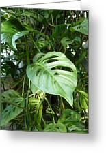 Tropical Green Foliage Greeting Card by Lingfai Leung
