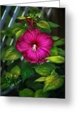 Tropical Hibiscus Greeting Card by Brenda Bryant