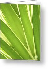 Tropical Leaves Greeting Card by Elena Elisseeva