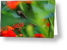 Trying to Hide Praying Mantis Greeting Card by Raymond Salani III