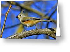 Tufted Titmouse Greeting Card by Gary Holmes