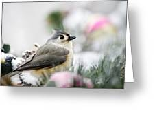 Tufted Titmouse Portrait Greeting Card by Christina Rollo