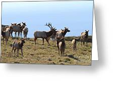 Tules Elks of Tomales Bay California - 7D21236 Greeting Card by Wingsdomain Art and Photography