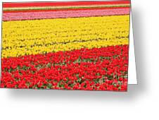 Tulip Fields 1 Greeting Card by Jasna Buncic