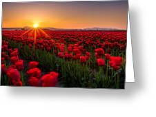 Tulip Fields Greeting Card by Alexis Birkill