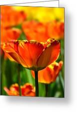 Tulip Greeting Card by Gynt