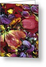 Tulip Heads Greeting Card by Jim Corwin