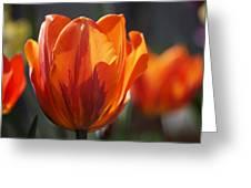 Tulip Prinses Irene Greeting Card by Rona Black