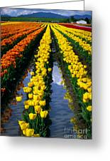 Tulip Reflections Greeting Card by Inge Johnsson