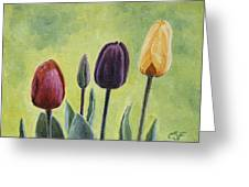 Tulip Trio Greeting Card by Crista Forest