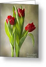 Tulipa Greeting Card by Jacky Parker