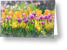 Tulips Greeting Card by Elizabeth Budd