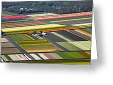 Tulips Fields, Lisse Greeting Card by Bram van de Biezen