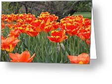 Tulips From Brooklyn Greeting Card by John Telfer