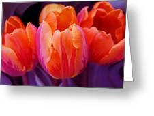 Tulips In Orange And Purple Greeting Card by Jennie Marie Schell