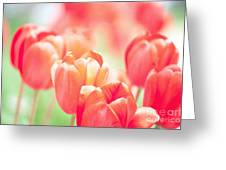 Tulips In The Sun Greeting Card by Kay Pickens