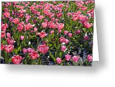 Tulips Greeting Card by Matthias Hauser