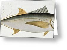 Tuna Greeting Card by Andreas Ludwig Kruger