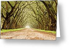 Tunnel In The Trees Greeting Card by Scott Pellegrin