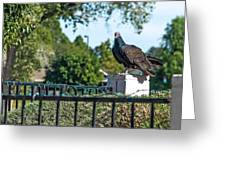 Turkey Vulture 4 Greeting Card by Steve Knievel